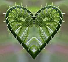 carla klouda fern heart