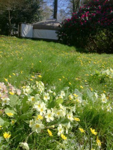 Primroses and spring sunshine