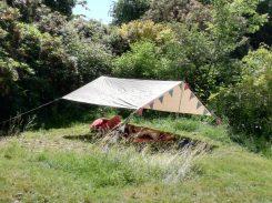 Summer Solstice women's retreat resting place